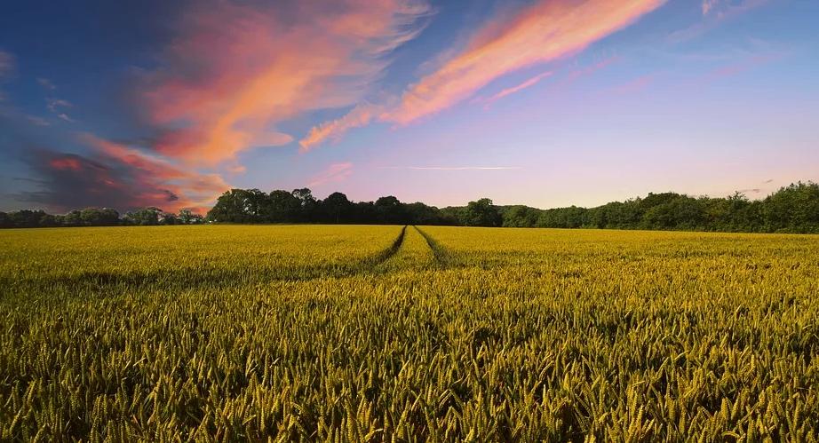 The Battle Against Rural Crime in Kent
