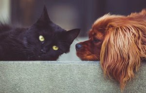 A Guide To Pet-Friendly Burglar Alarm Systems