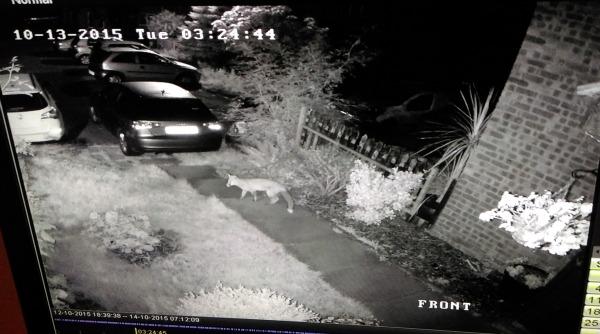 Spy Alarms Night Vision Cctv Cameras For Your Home Spy