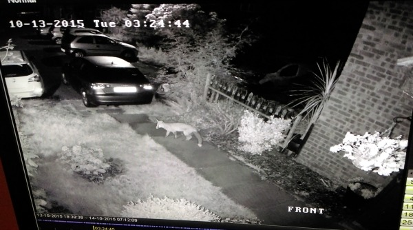 Do You Need A Night Vision Camera? 5 Decisive Questions