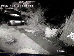 HD CCTV Kent